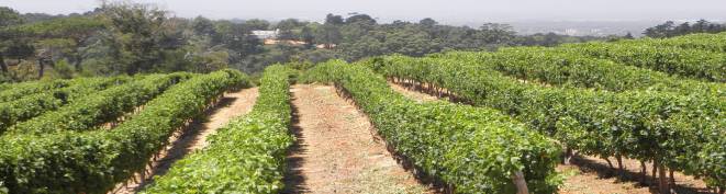 Constantia Glen Wine Farm | Constantia Valley