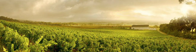 Steenberg Vineyards Wine Estate | Constantia Valley